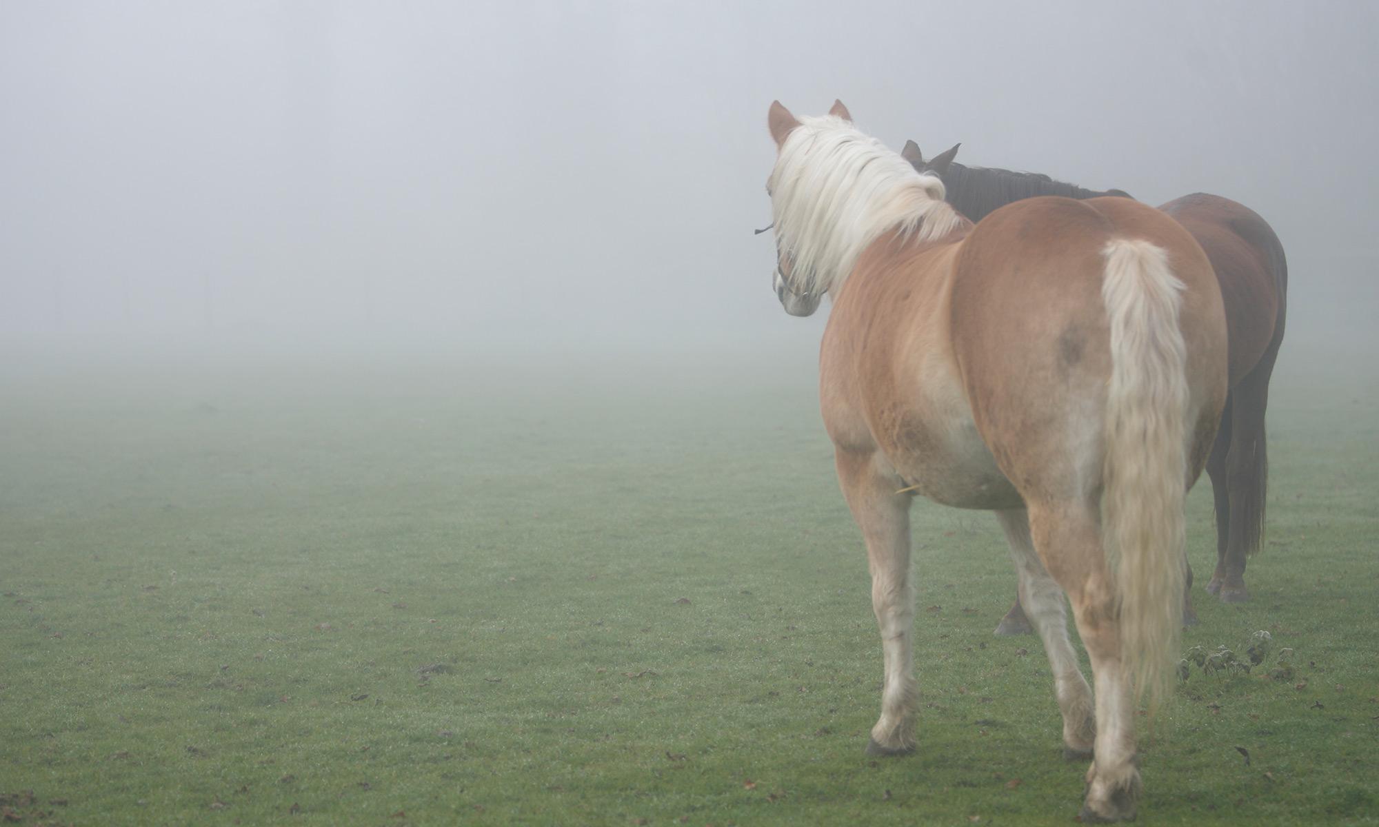 Pferde-Seminarzentrum